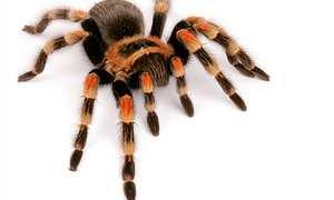 Große Spinnenausstellung